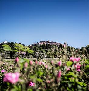 Dior - Grasse Landscape